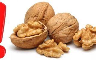 Грецкие орехи – польза и вред для организма. сколько нужно съесть в день для оздоровления?