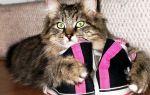 Как избавиться от запаха кошачьей мочи в квартире в домашних условиях: 19 способов