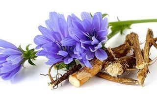 Цикорий растворимый – полезные свойства и противопоказания
