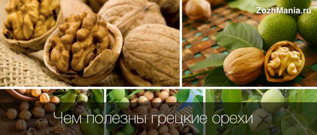 Грецкий орех - польза и вред для женщин и мужчин