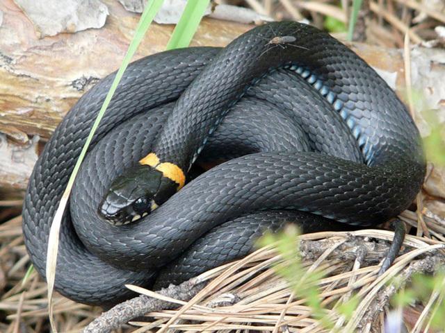 Как избавиться от змей на даче простым способом: 16 вариантов
