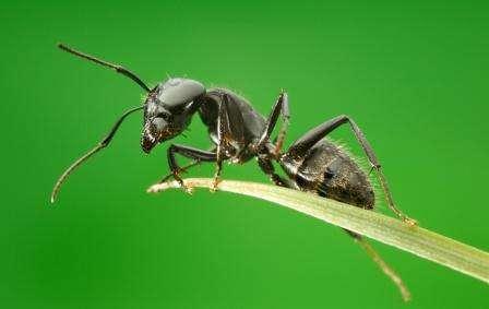 Как бороться с муравьями в саду и огороде: ТОП-10 средств