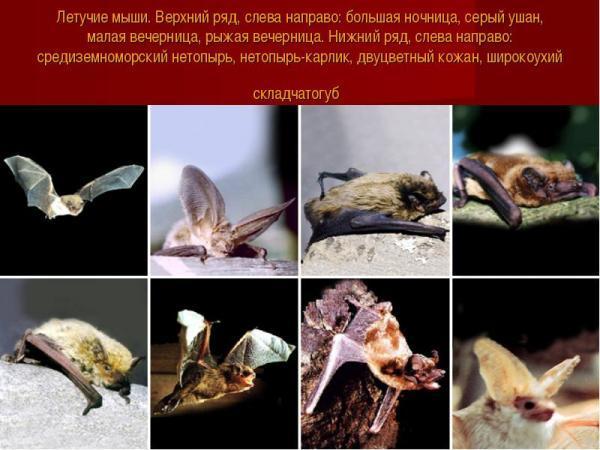 Как избавиться от летучих мышей под крышей дома: 12 способов