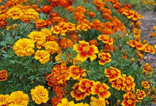 Средство от крота на участке и огороде: ТОП-15 лучших