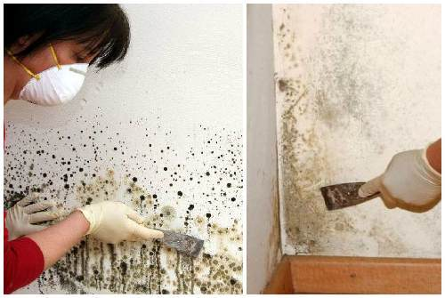 Плесень на стенах в квартире – как избавиться в домашних условиях: 12 способов