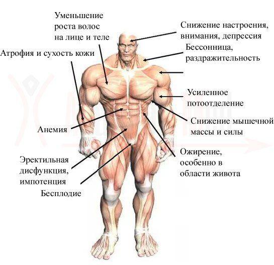 ТОП-20 способов, как повысить тестостерон у мужчин: препараты в аптеке, народные средства