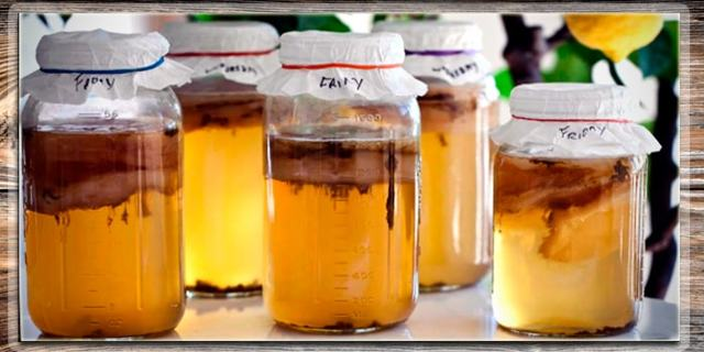 Чайный гриб – польза и вред