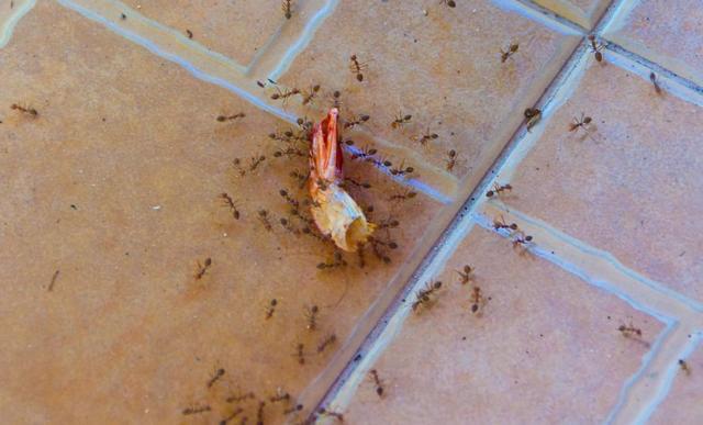 Как избавиться от муравьев в квартире: ТОП-23 средства