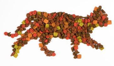 Влажный корм для кошек – рейтинг: ТОП-10