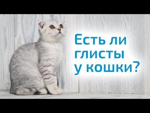 Глисты у кошек: симптомы и лечение в домашних условиях