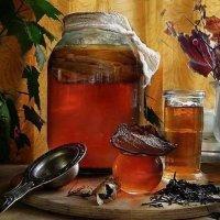 Чайный гриб – как вырастить с нуля пошагово в домашних условиях?