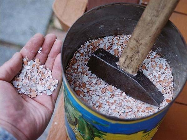 Как избавиться от улиток на даче простым способом