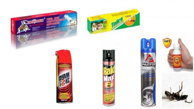 Как избавиться от муравьев в доме навсегда: народные средства + химикаты