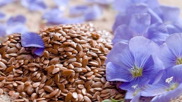 Как принимать семена льна для похудения и очищения кишечника?
