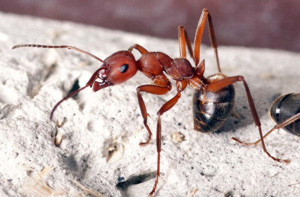 Как избавиться от муравьев в доме навсегда в домашних условиях: ТОП-16 средств